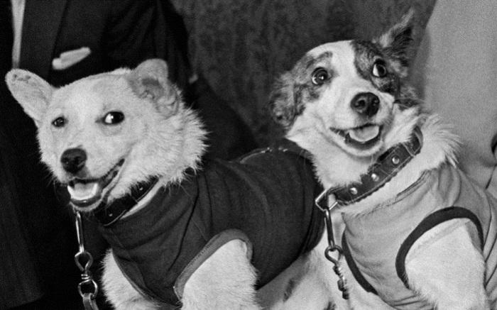 Белка и Стрелка животные, собаки, ссср
