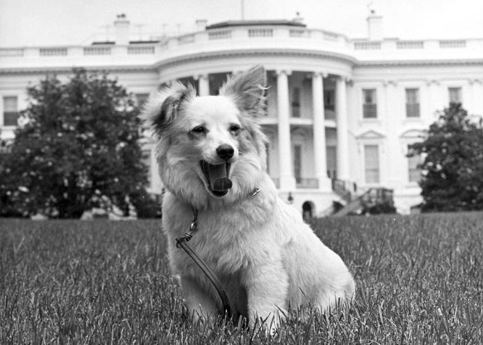 Любимцы детства: животные советского кинематографа животные, собаки, ссср