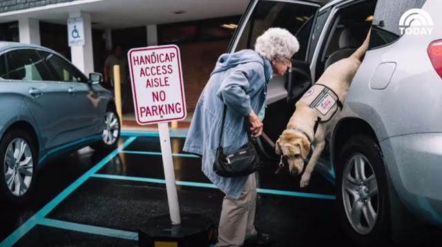 92-летняя бабуська не выходила из дома, пока не познакомилась с этим псом пёс, спасение, старики