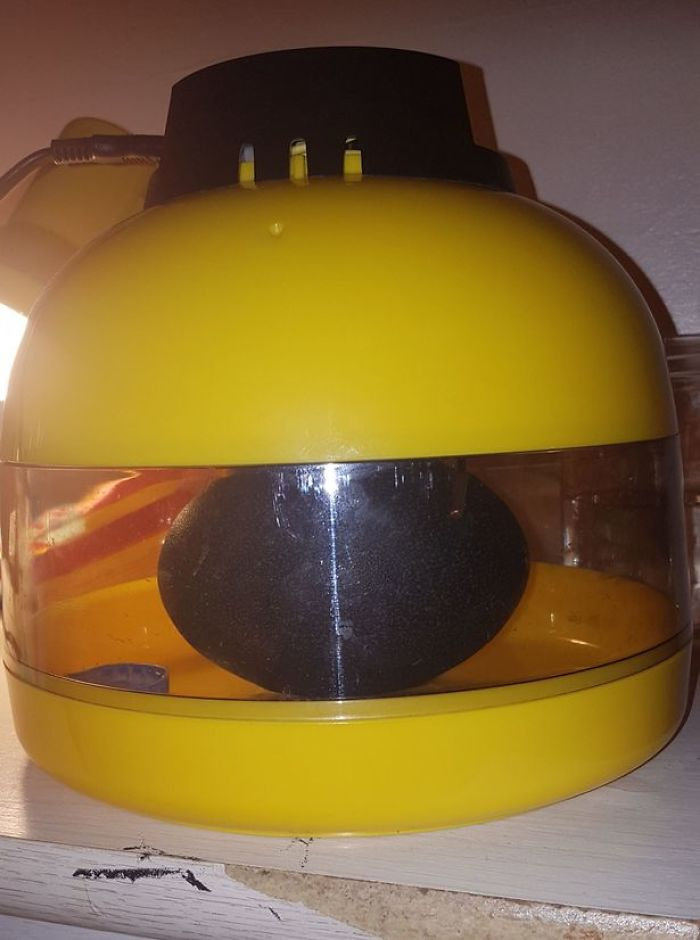 Девушка купила яйцо на eBay, и даже не знала кто из него вылупится