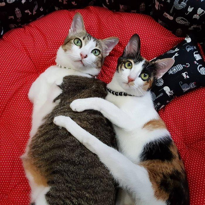 Этот котик остался всего с двумя лапками, но он не унывает и живёт обычной жизнью  кот, котик, фото