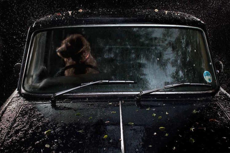 Фотографии запертых в машине собак, которые тронут вас до глубины души  интерсеное, собаки, фото
