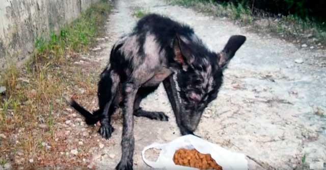 Этот пёс жил в лесу, потому что его все боялись  собака, спасение, фото