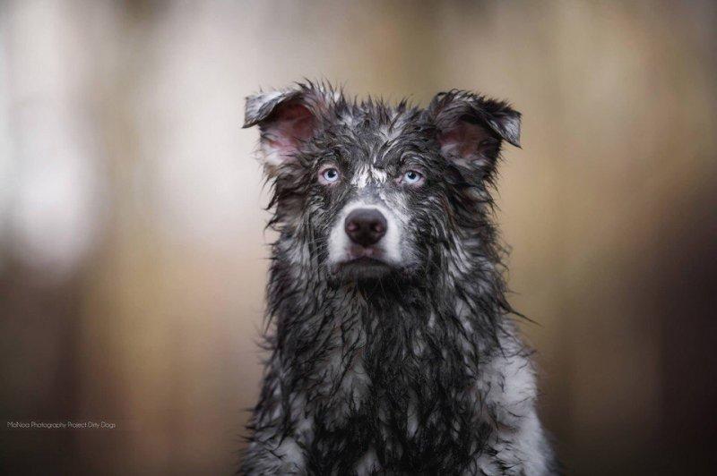 Собаки в грязи изваляки грязь, собаки, фото