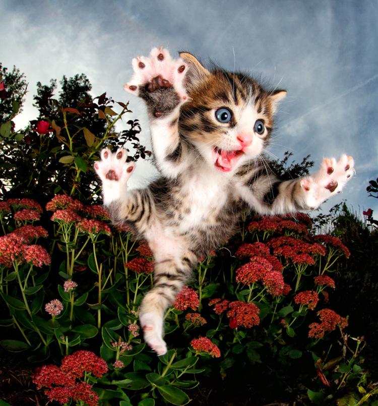 Милые и смешные: фотографии котят в прыжке, которые поднимут вам настроение котята, прикол, фото