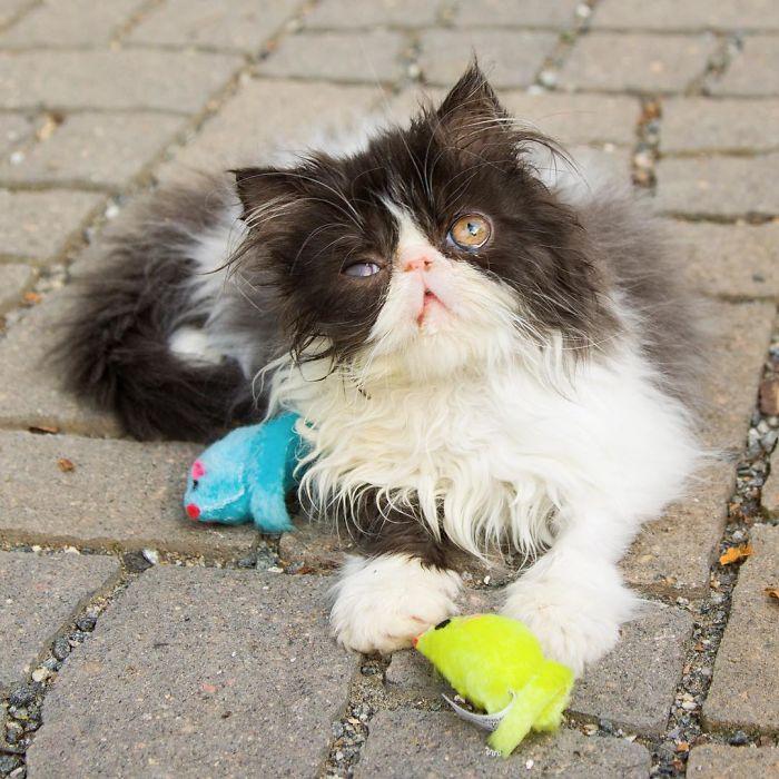 Кошка-пират, которая всё равно осталась весёлой  животные, кошка, фото