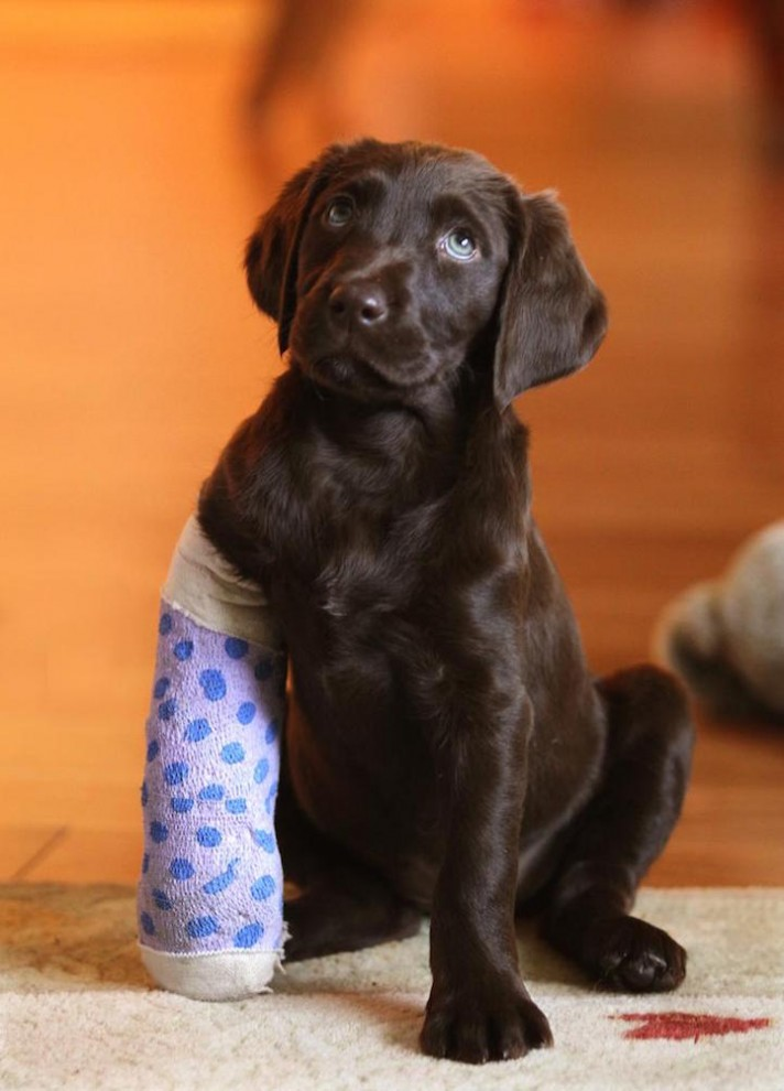 Трогательные фотографии раненных животных, которых исцелила любовь человека  животные, лечение, спасение