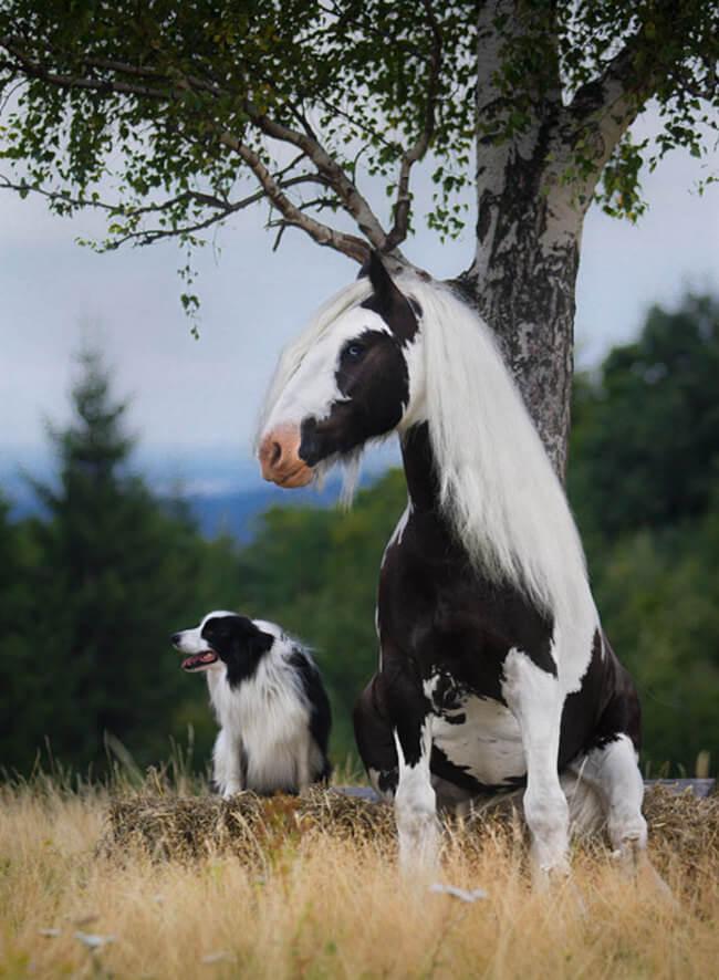 Эти животные удивительно похожи друг на друга  животные, сходства, фото