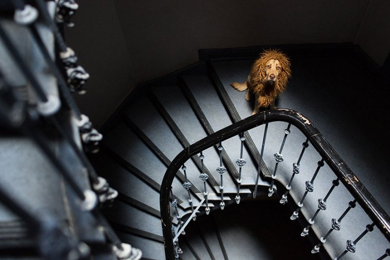 Бродячий пёс превращается в гордого льва  интересное, собака, фото