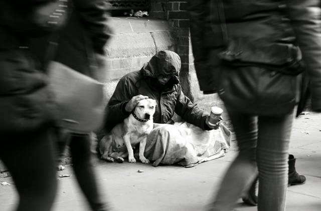 Трогательные фотографии, которые доказывают преданность собак  интересное, собаки, фото