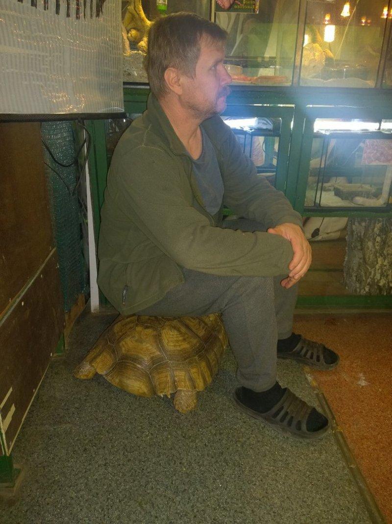 В иркутском зоопарке черепахи предприняли попытку побега, но их предал сторожевой кот зоопарк, черепахи, юмор
