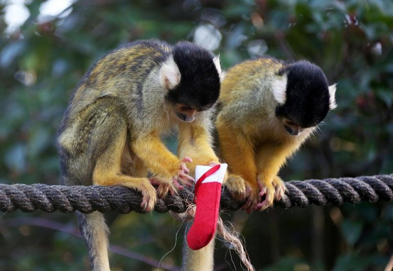 Обитателям лондонского зоопарка вручили рождественские подарки зоопарк, фото, юмор