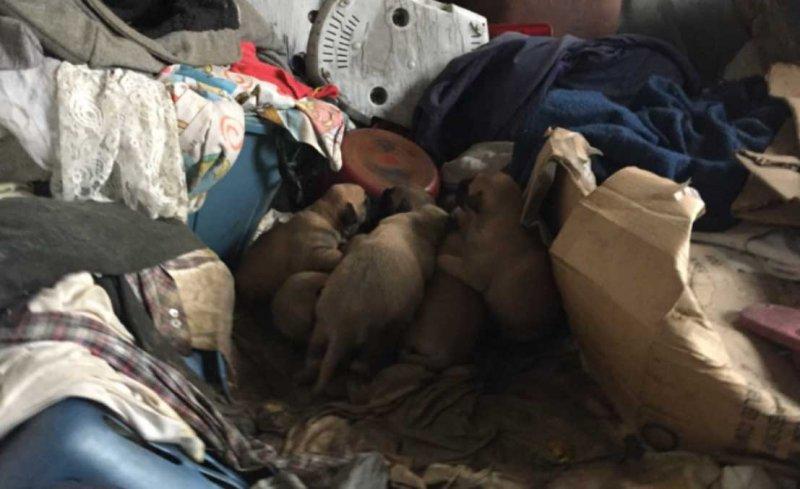 Собака прятала новорожденных щенков в заброшенном доме, пока их чудом не нашли животные, история, собаки, спасение, щенки
