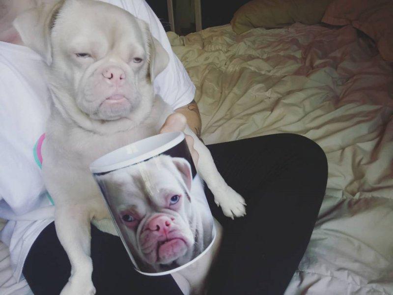 Мистер Корнелиус, кстати, настоящая звезда, есть даже сувениры с его мордочкой грустная мордочка, животные, пес обрел дом, приют, собака, счастливая семья