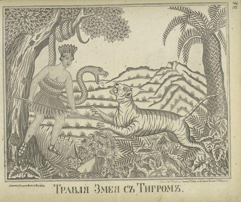 Травля змея и тигром, 1868 животные, история, коты, лубочные картинки, мыши, русь, собаки