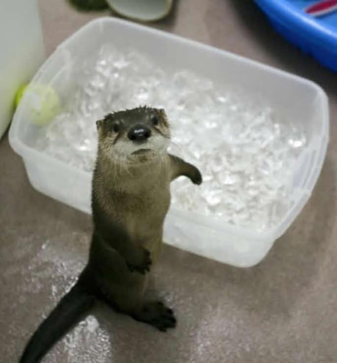 Животные, которые изо всех сил стараются освежиться  жарко, животные, смешно, снег, собаки, юмор