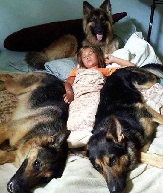 8. С какой стороны не подойдешь - не подойдешь любимчики, милые псы, охранники, собаки, фото, щенки