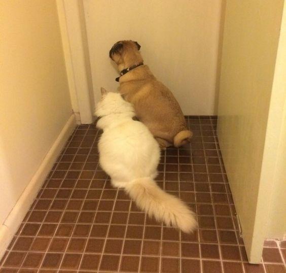 4. Они всегда так сидят, пока я не выйду любимчики, милые псы, охранники, собаки, фото, щенки