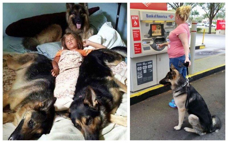На страже безопасности  любимчики, милые псы, охранники, собаки, фото, щенки