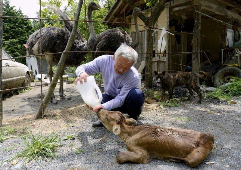 Мужчина вернулся в город после ядерной катастрофы, чтобы заботиться о животных  животные, истории, спасение