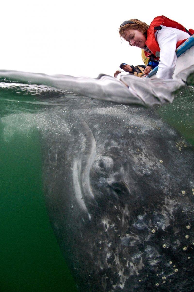 Ласковый гигант  интересное, кит, океан