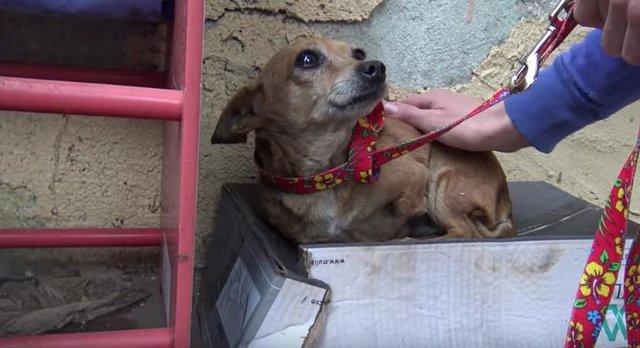 Трёхлапая малышка лежала посреди улицы и никто не хотел к ней подходить собака, спасение, фото