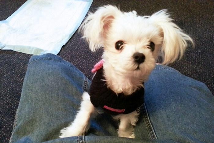 Она выбросила свою собачку из окна автомобиля  собака, спасение, фото