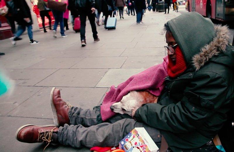 Люди подарили зимнюю одежду собакам бездомных доброта, помощь, собаки