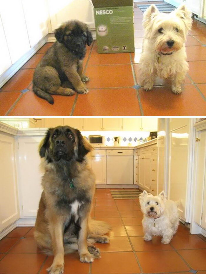 Растущие вместе: до и после интересное, малыши, фото