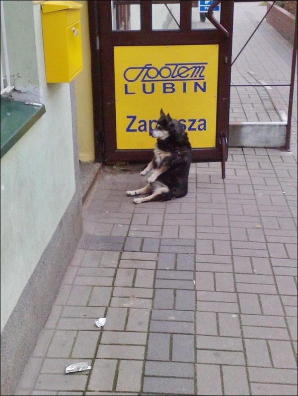 Собаки, которым очень удобно собаки, фото, юмор