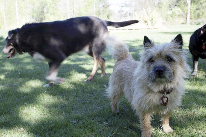 Пёс пропал на сутки, а потом вернулся с сюрпризом собака, спасение, фото