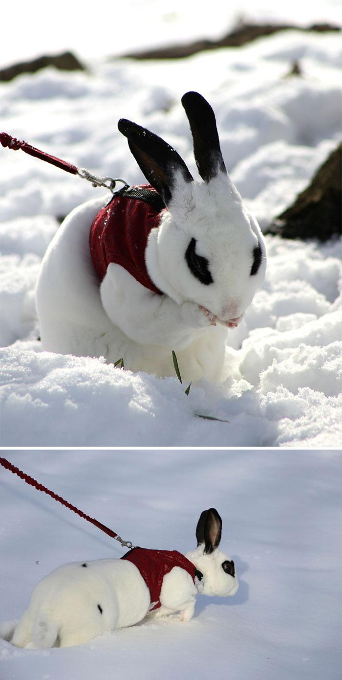 Животные, которые впервые увидели снег животные, снег, фото