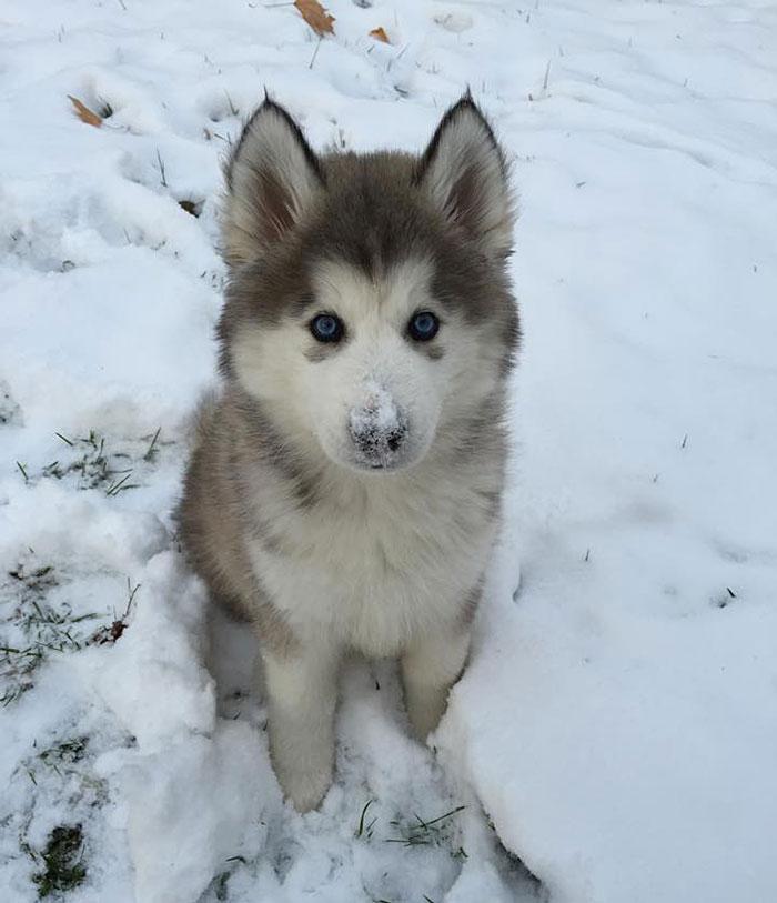 Это чертовски мило животные, снег, фото