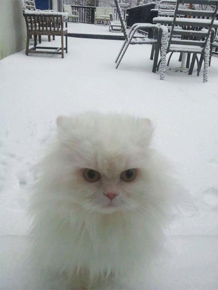 Ему не нравится. Точно. животные, снег, фото