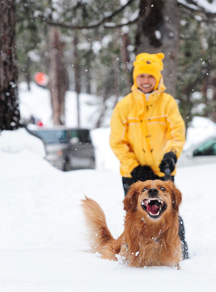 Думаю ему нравится животные, снег, фото