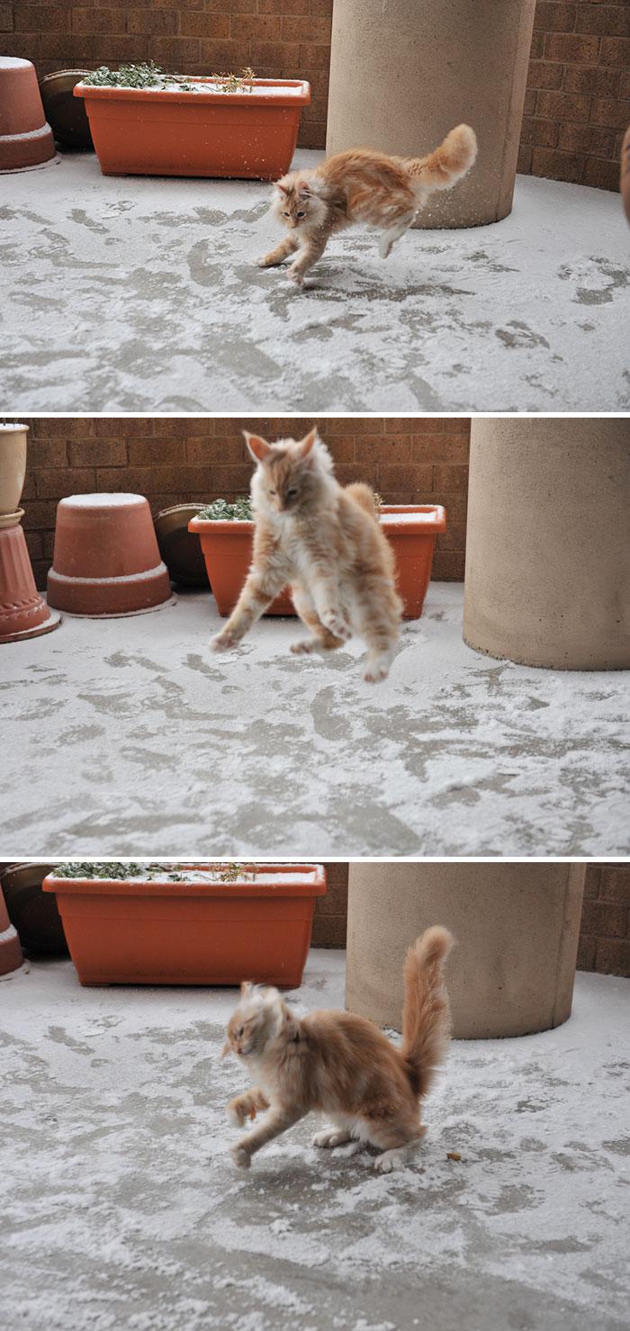 А этот котик по настоящему радуется снегу животные, снег, фото