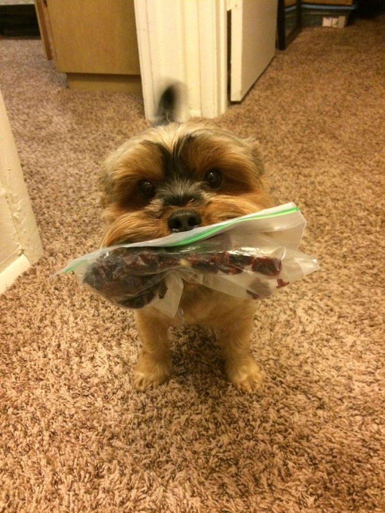 Собака всегда напомнит вам, что настало время обеда собаки, фото, юмор