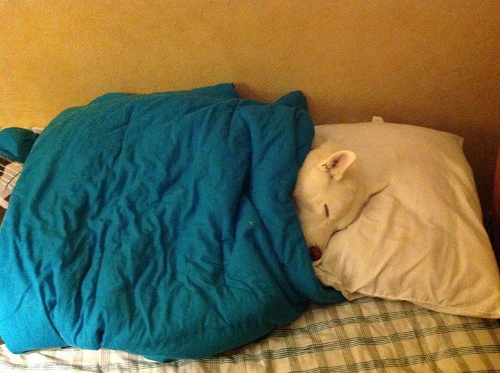 Они спят с нами собаки, фото, юмор