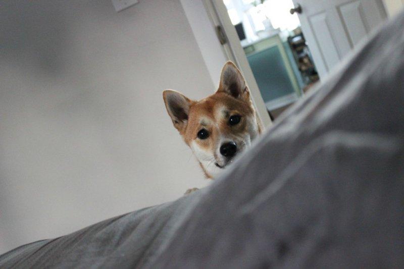 Собаки - отличные будильники собаки, фото, юмор