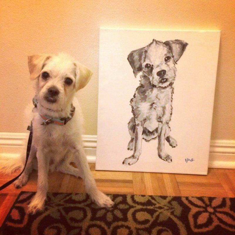 У вас куча изображений с собаками собаки, фото, юмор