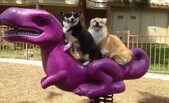 Они очень дружны интересное, собаки, фото