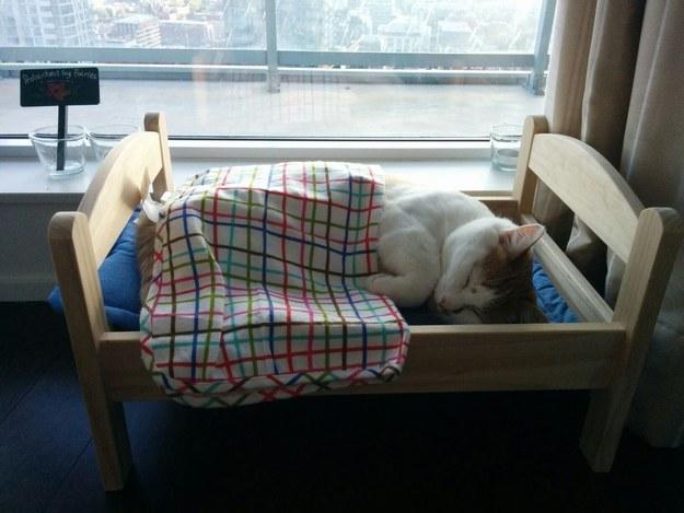 В отличае от многих людей, они очень милые, когда спят интересное, собаки, фото
