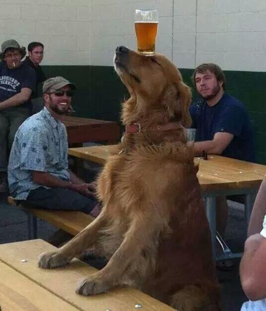 И умеют развеселить вас интересное, собаки, фото