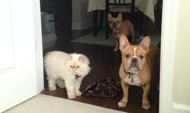 Они будут ждать вас интересное, собаки, фото
