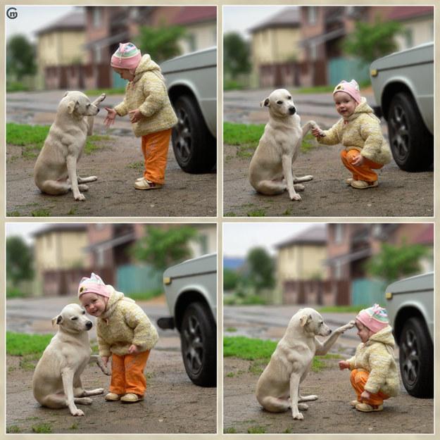 Животные всегда рады вас видеть интересное, собаки, фото