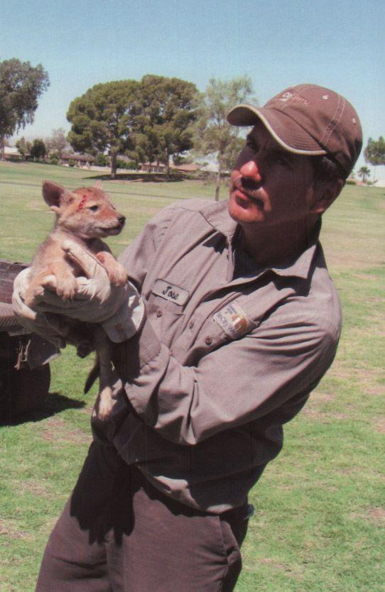 Женщина обнаружила странное существо в колючках на газоне история, койот, спасение, фото, щенок
