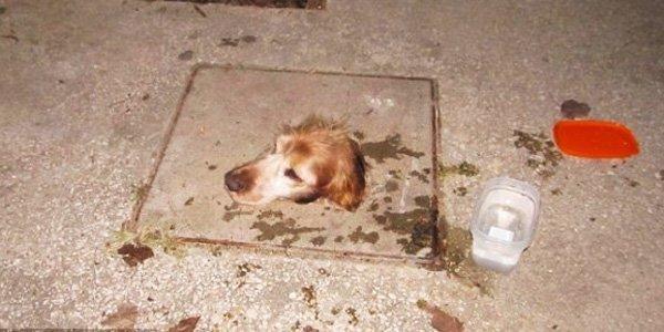 Собака попала в смертельную ловушку, и надежды на спасение не было животные, интересеное, спасение животных, спасение собак
