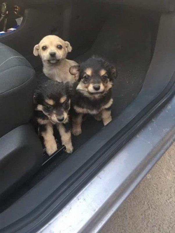Эти малыши выбежали прямо под колёса животные, новость, собаки