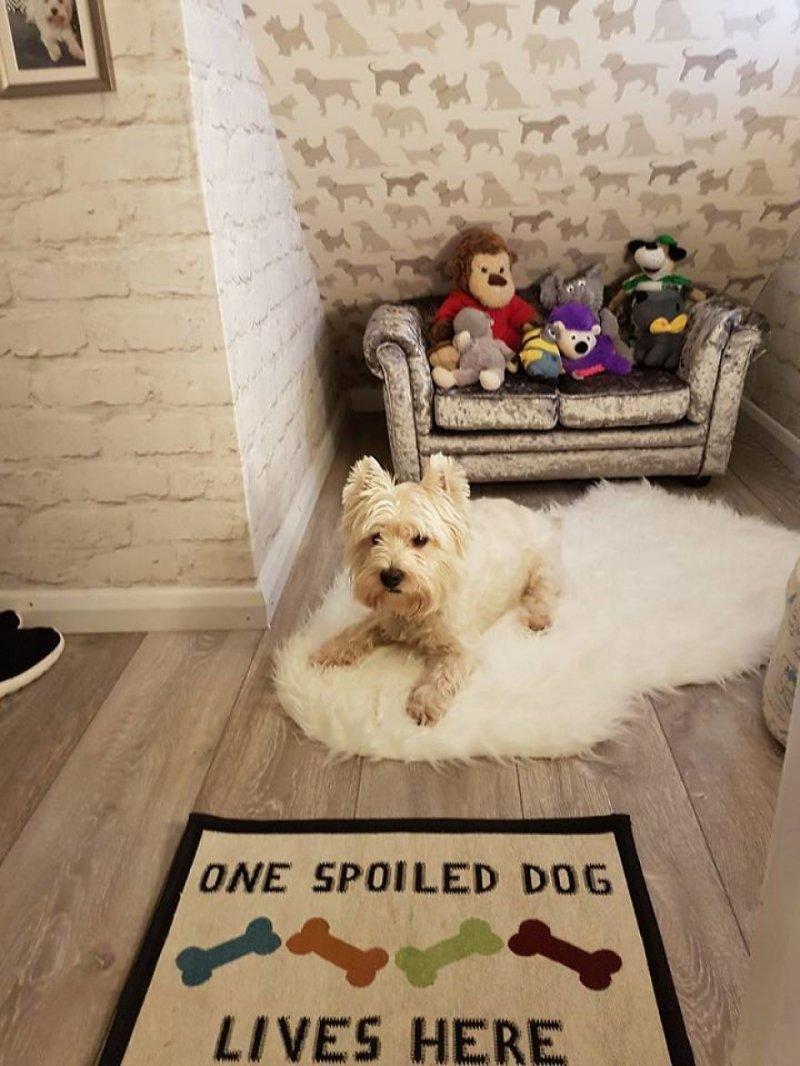 В комнате появились все любимые вещи Молли: игрушки, подушка домик для собаки, животные, сестра, собака