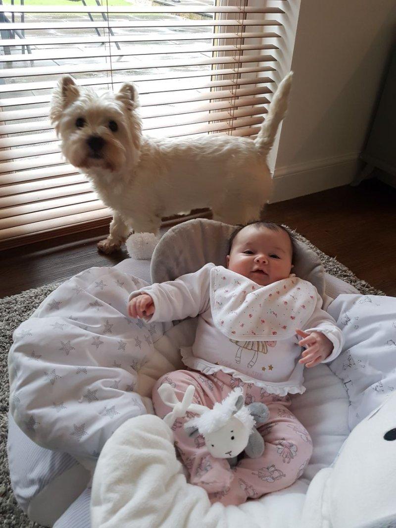 Фото с сестренкой домик для собаки, животные, сестра, собака